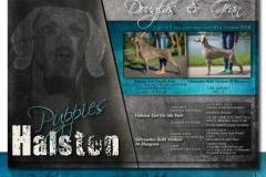 Halston Puppies - Douglas & Gean