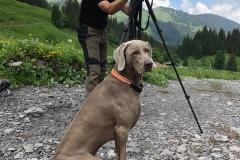 Hund und Herrchen bei der Wildbeobachtung