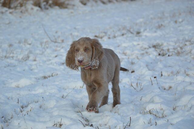 Die kleine Bagheera im Schnee