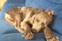 Bagheera beim Schlafen